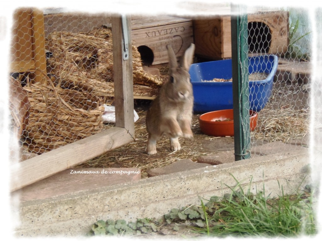 Lucky mon petit lapin de garenne zanimaux de compagnie - Mon petit lapin s est cache dans le jardin ...